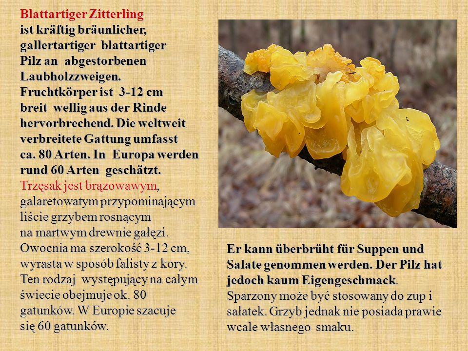 Blattartiger Zitterling ist kräftig bräunlicher, gallertartiger blattartiger Pilz an abgestorbenen Laubholzzweigen. Fruchtkörper ist 3-12 cm breit wellig aus der Rinde hervorbrechend. Die weltweit verbreitete Gattung umfasst ca. 80 Arten. In Europa werden rund 60 Arten geschätzt. Trzęsak jest brązowawym, galaretowatym przypominającym liście grzybem rosnącym na martwym drewnie gałęzi. Owocnia ma szerokość 3-12 cm, wyrasta w sposób falisty z kory. Ten rodzaj występujący na całym świecie obejmuje ok. 80 gatunków. W Europie szacuje się 60 gatunków.
