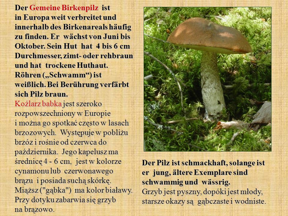 """Der Gemeine Birkenpilz ist in Europa weit verbreitet und innerhalb des Birkenareals häufig zu finden. Er wächst von Juni bis Oktober. Sein Hut hat 4 bis 6 cm Durchmesser, zimt- oder rehbraun und hat trockene Huthaut. Röhren (""""Schwamm ) ist weißlich. Bei Berührung verfärbt sich Pilz braun. Koźlarz babka jest szeroko rozpowszechniony w Europie i można go spotkać często w lasach brzozowych. Występuje w pobliżu brzóz i rośnie od czerwca do października. Jego kapelusz ma średnicę 4 - 6 cm, jest w kolorze cynamonu lub czerwonawego brązu i posiada suchą skórkę. Miąższ ( gąbka ) ma kolor białawy. Przy dotyku zabarwia się grzyb na brązowo."""