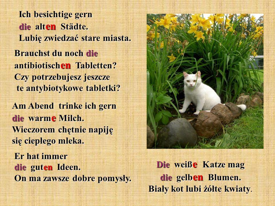 Die weiße Katze mag die gelben Blumen. Biały kot lubi żółte kwiaty.