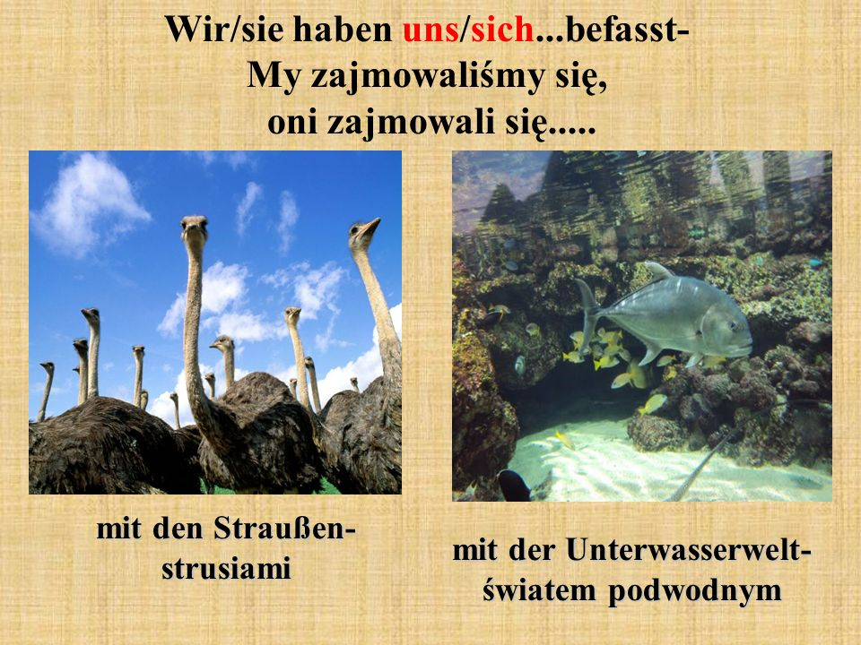 mit den Straußen- strusiami mit der Unterwasserwelt- światem podwodnym