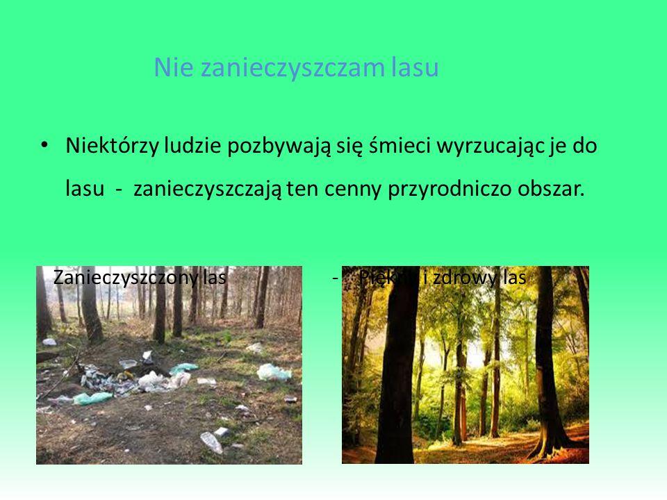 Nie zanieczyszczam lasu