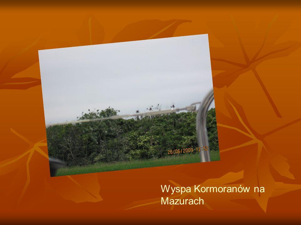 Wyspa Kormoranów na Mazurach