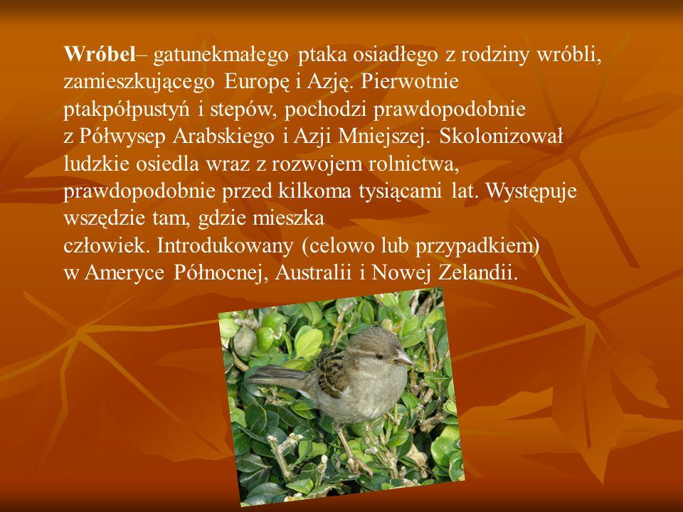 Wróbel– gatunekmałego ptaka osiadłego z rodziny wróbli, zamieszkującego Europę i Azję.
