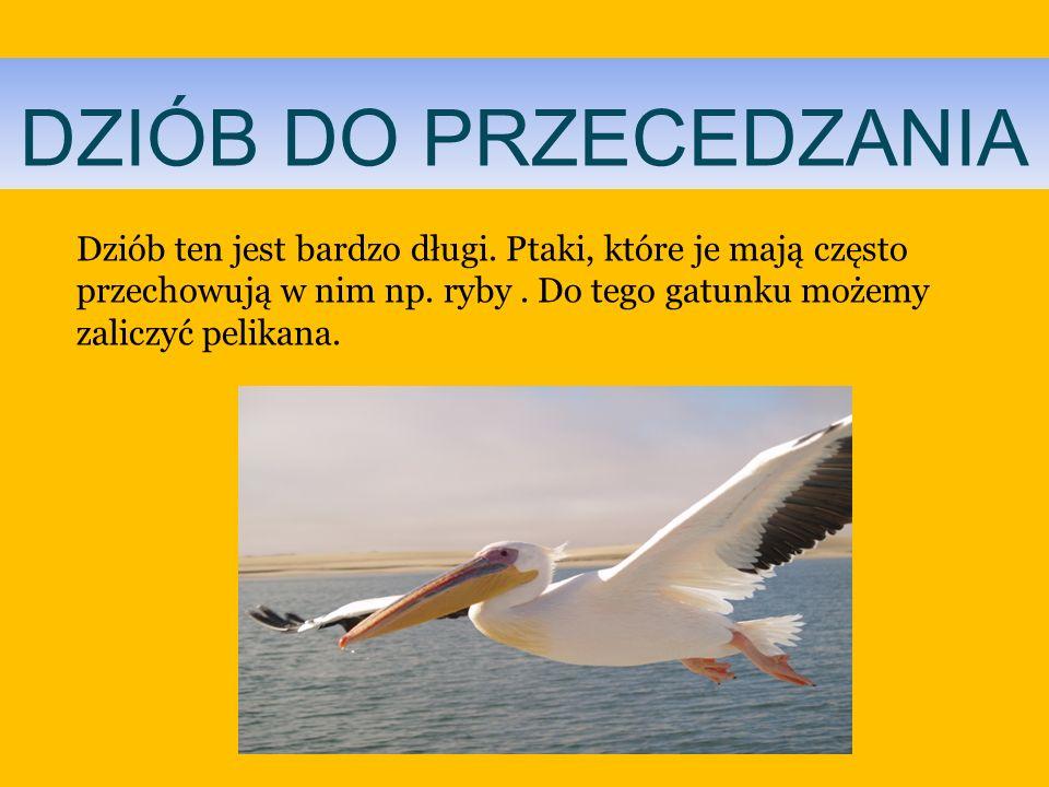 DZIÓB DO PRZECEDZANIADziób ten jest bardzo długi.Ptaki, które je mają często przechowują w nim np.