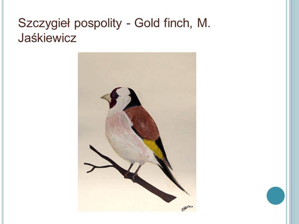 Szczygieł pospolity - Gold finch, M. Jaśkiewicz