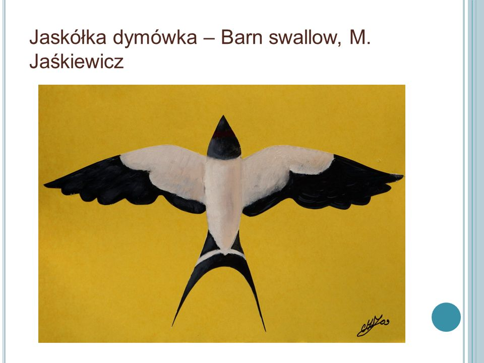 Jaskółka dymówka – Barn swallow, M. Jaśkiewicz