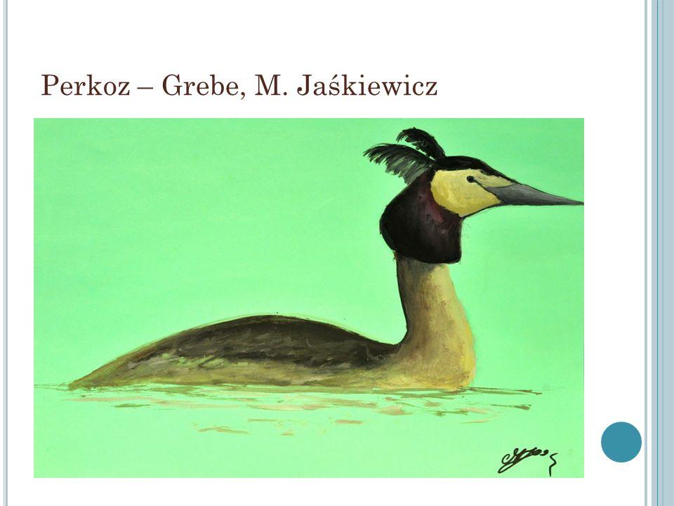 Perkoz – Grebe, M. Jaśkiewicz