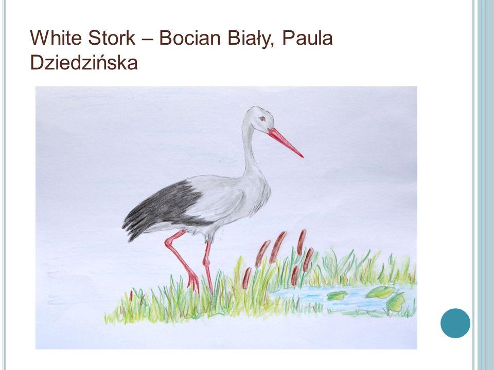 White Stork – Bocian Biały, Paula Dziedzińska