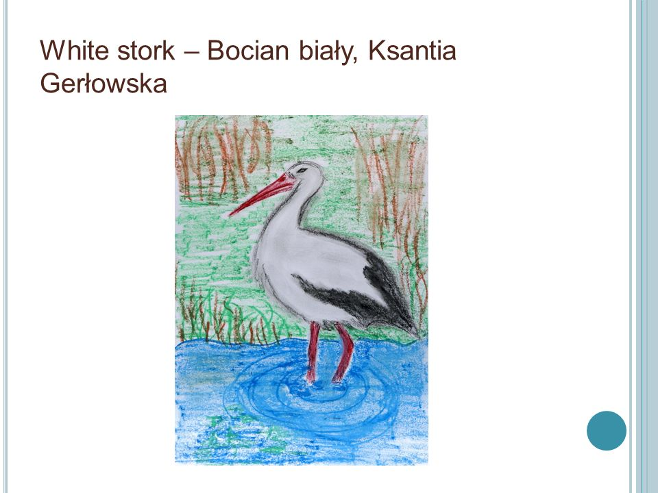 White stork – Bocian biały, Ksantia Gerłowska
