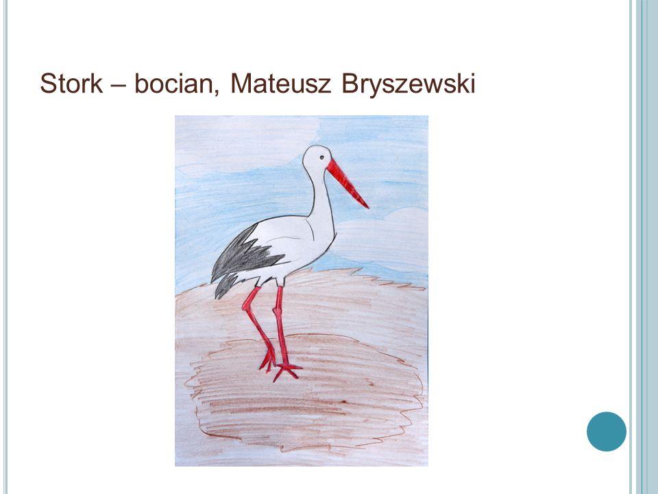 Stork – bocian, Mateusz Bryszewski