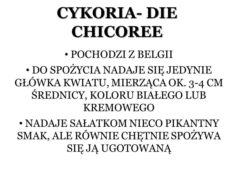CYKORIA- DIE CHICOREE POCHODZI Z BELGII