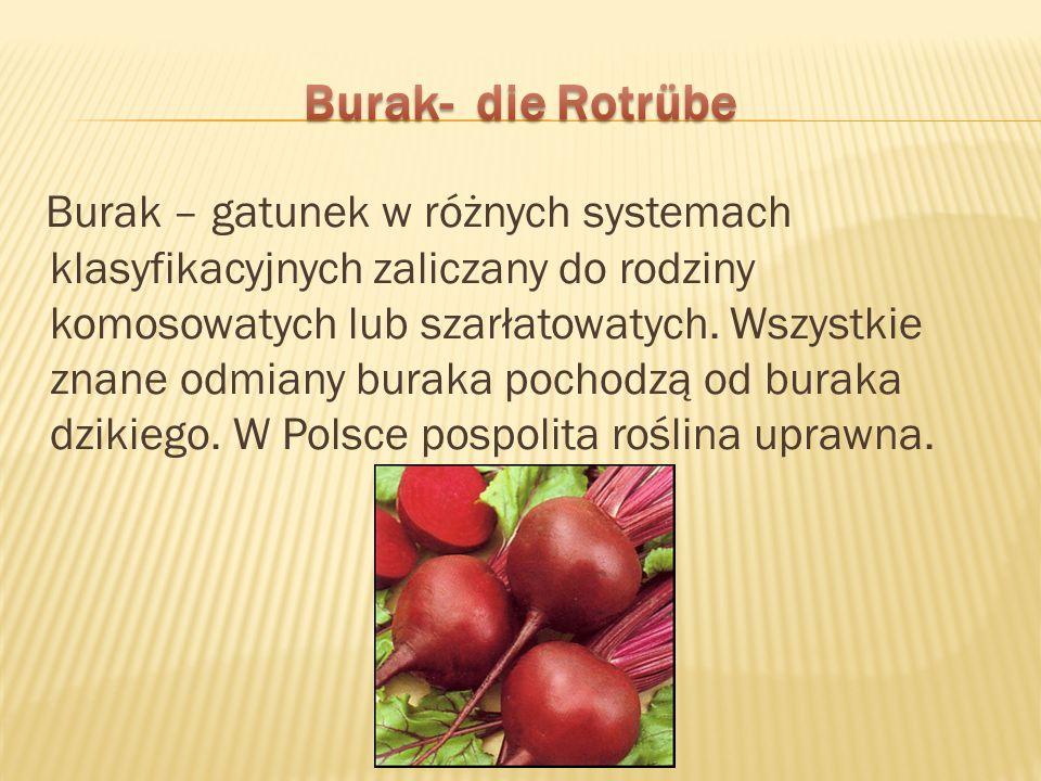 Burak- die Rotrübe