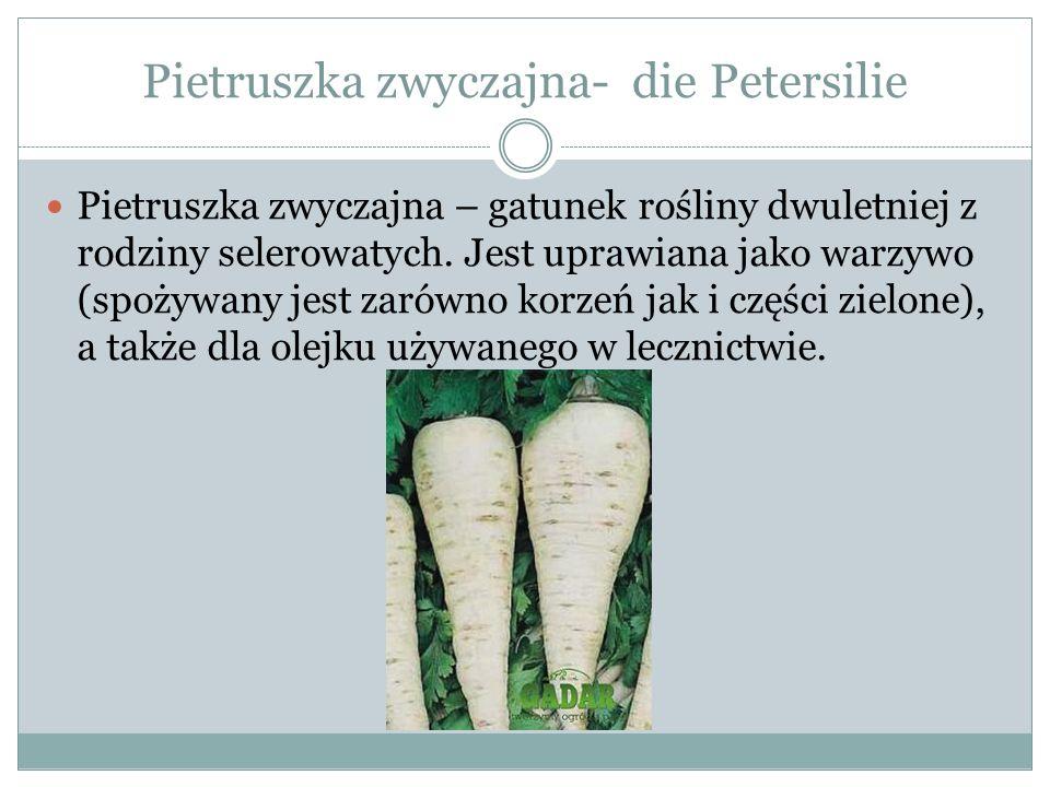 Pietruszka zwyczajna- die Petersilie