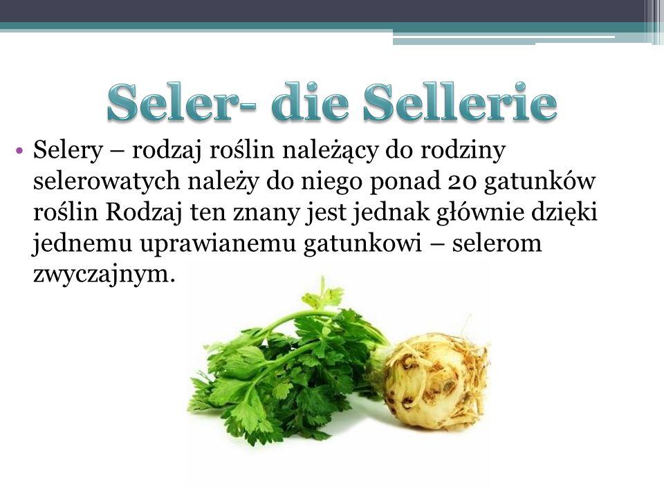 Seler- die Sellerie