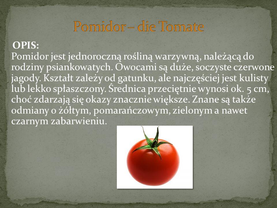 Pomidor – die Tomate