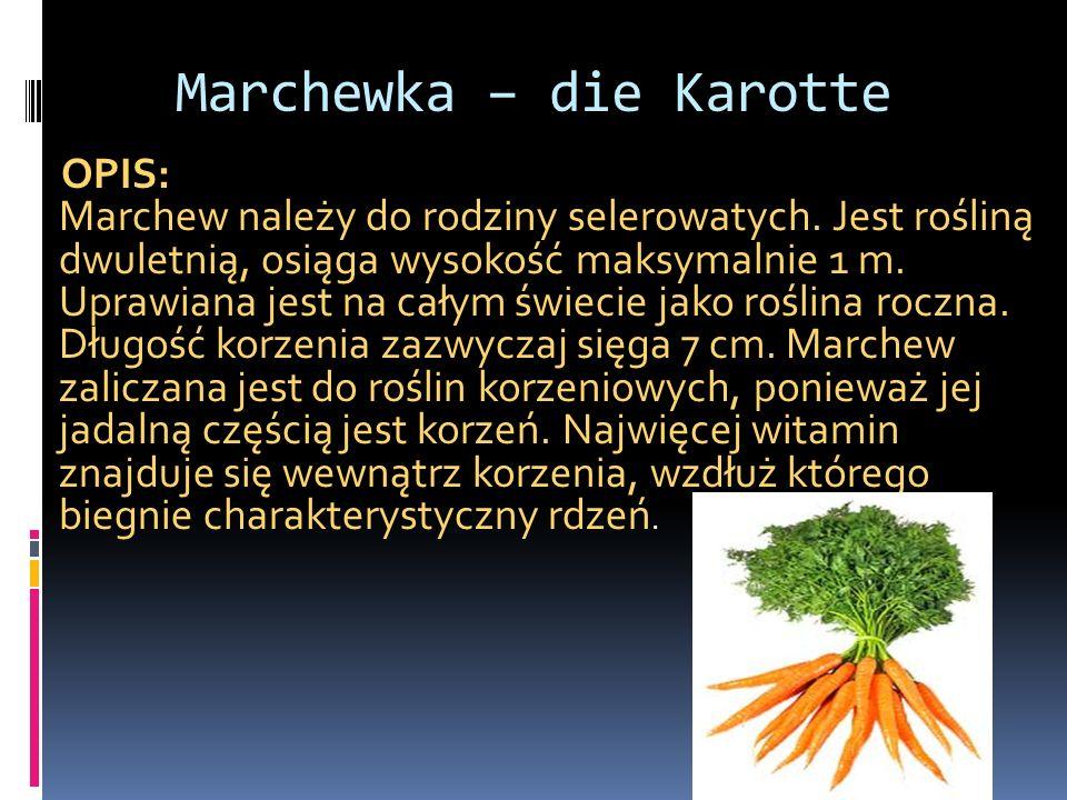 Marchewka – die Karotte
