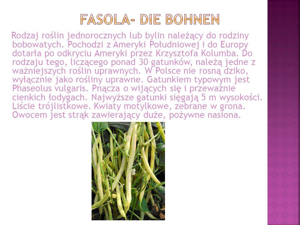 FASOLA- die BOHNEN