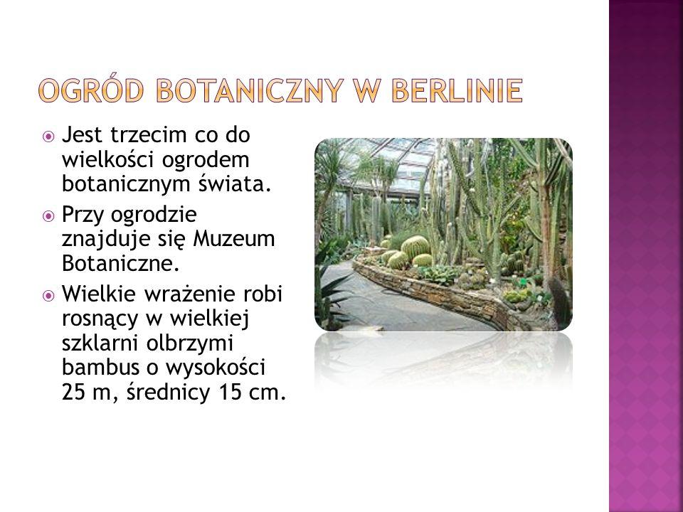 Ogród botaniczny w Berlinie