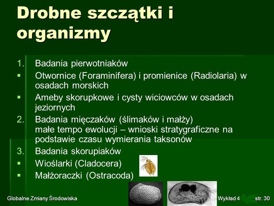 Drobne szczątki i organizmy