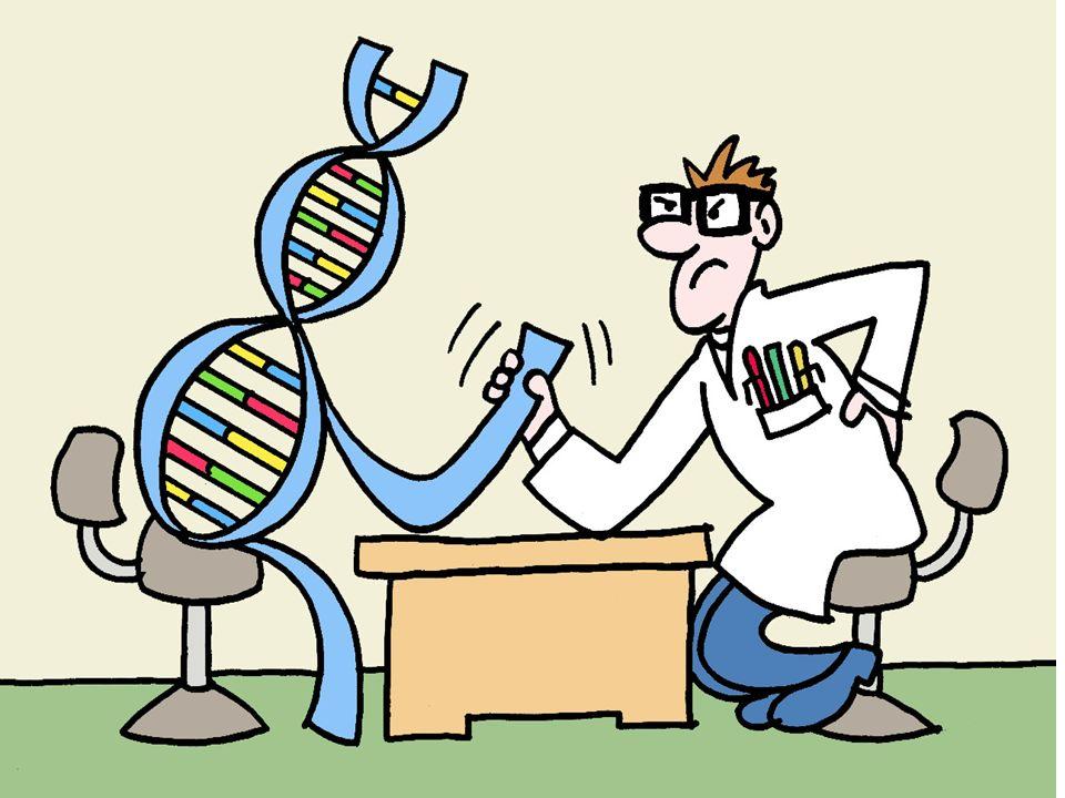 Bardzo szybko okazało się, że rozwiązania uzyskane metodami ewolucyjnymi są z reguły lepsze od tych wymyślanych przez ludzi.