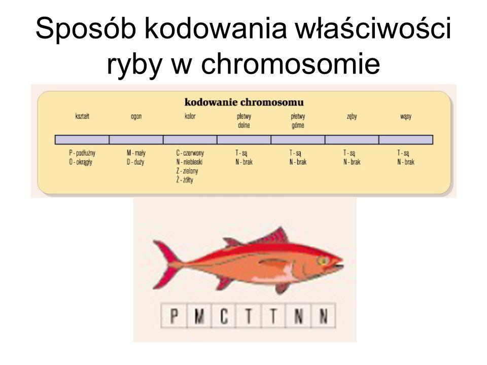 Sposób kodowania właściwości ryby w chromosomie