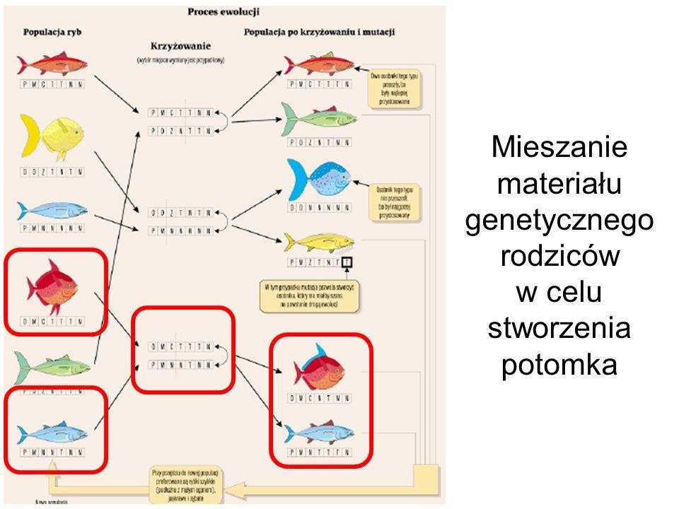 Mieszanie materiału genetycznego rodziców w celu stworzenia potomka