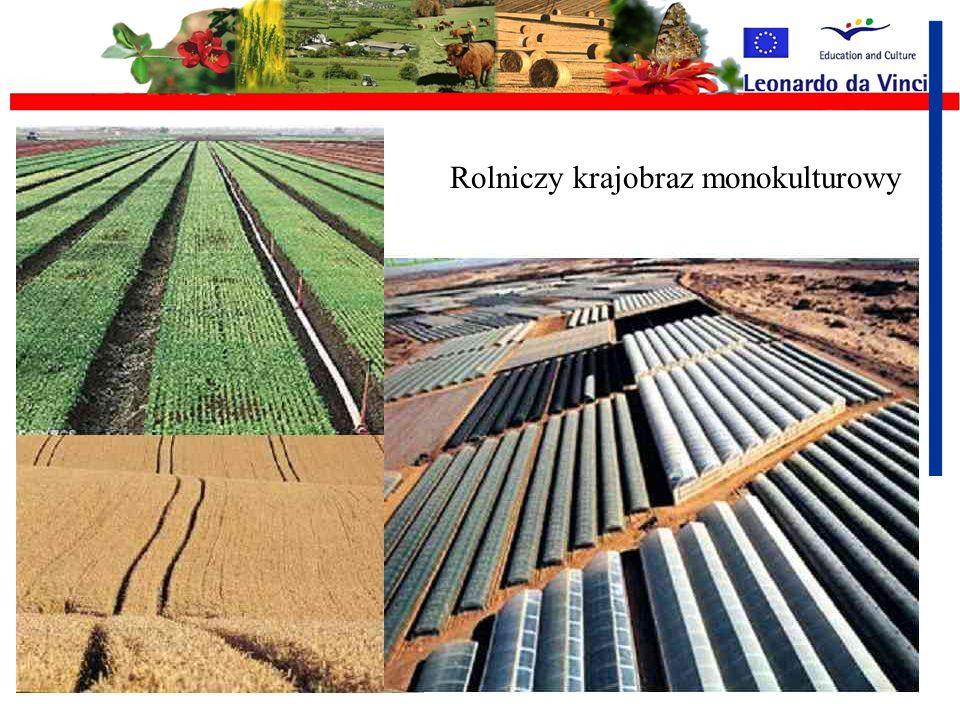 Rolniczy krajobraz monokulturowy