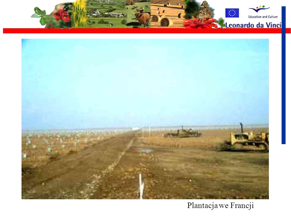 Plantacja we Francji