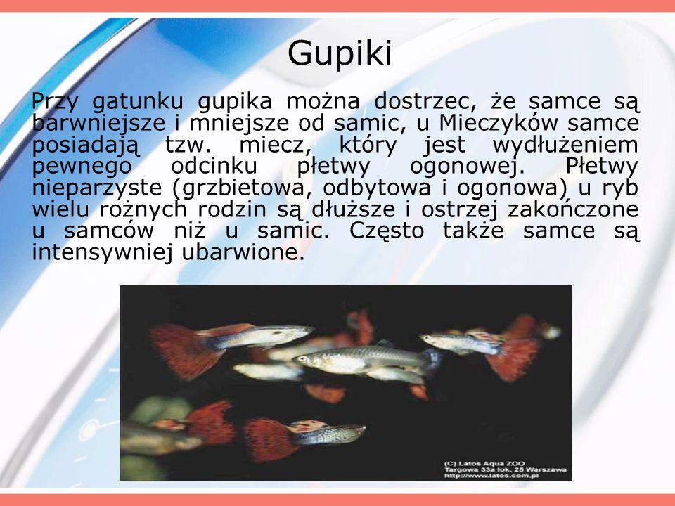 Gupiki