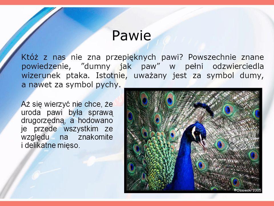 Pawie