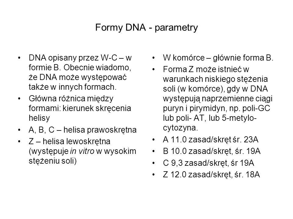 Formy DNA - parametry DNA opisany przez W-C – w formie B. Obecnie wiadomo, że DNA może występować także w innych formach.