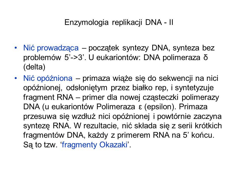 Enzymologia replikacji DNA - II
