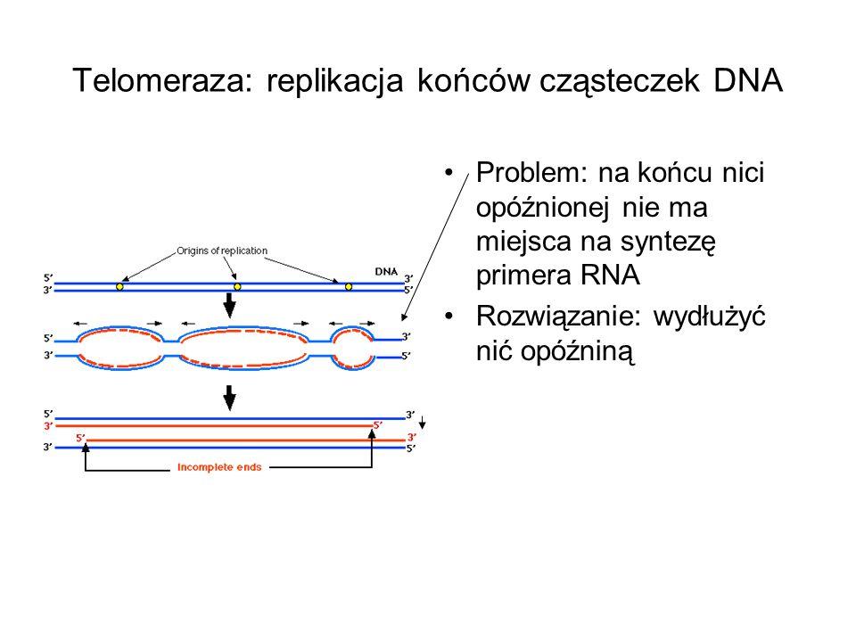 Telomeraza: replikacja końców cząsteczek DNA