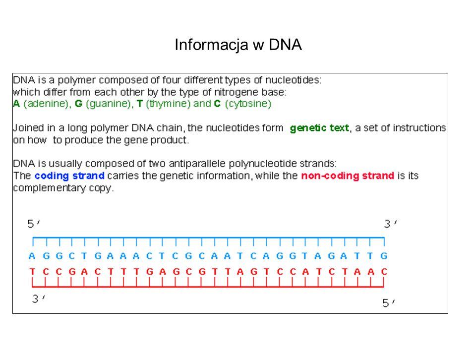 Informacja w DNA