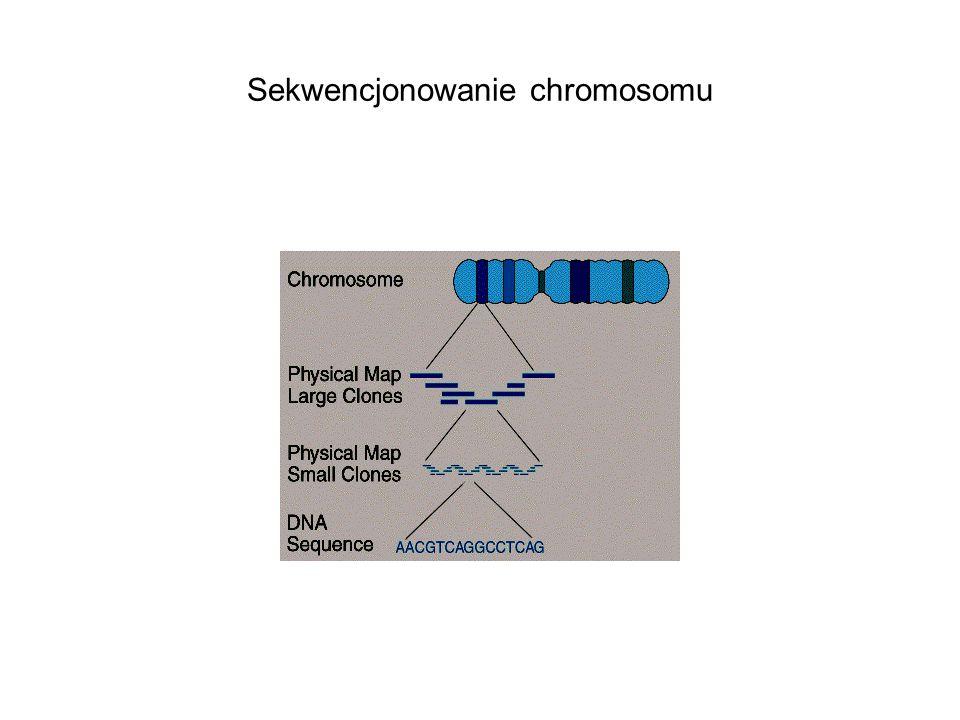 Sekwencjonowanie chromosomu