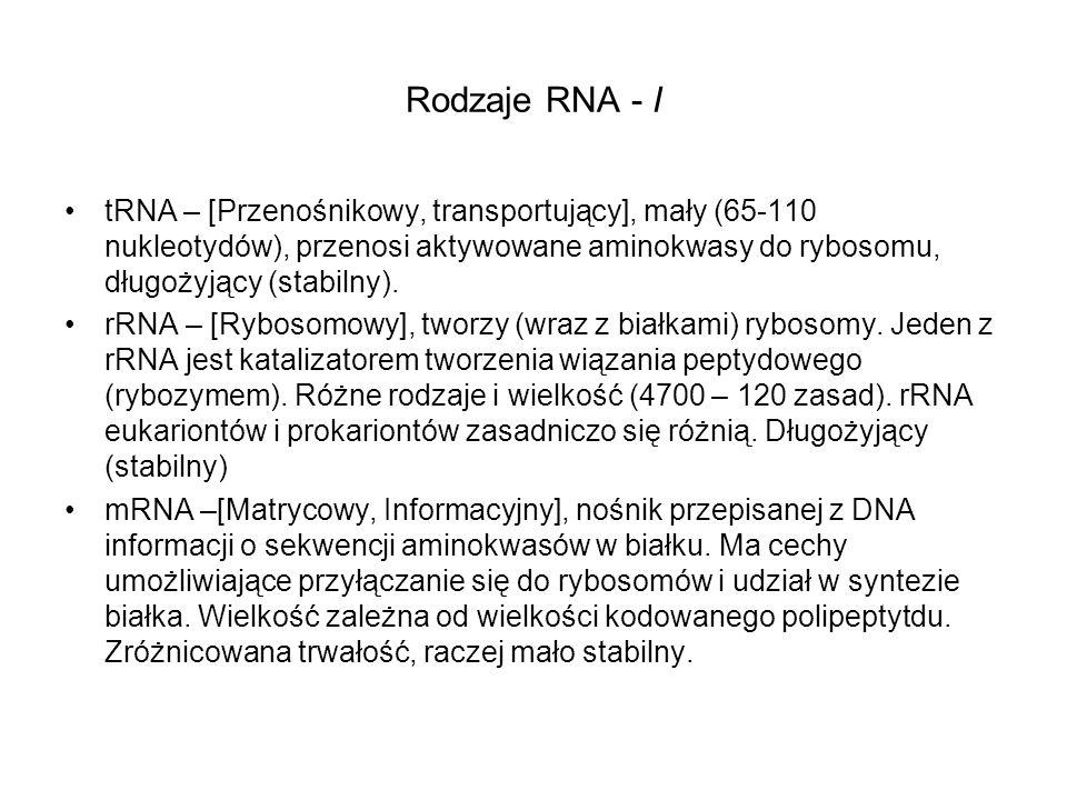 Rodzaje RNA - I
