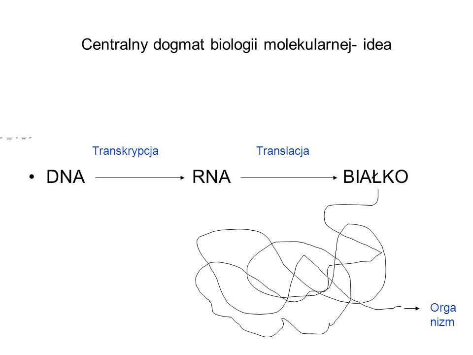 Centralny dogmat biologii molekularnej- idea