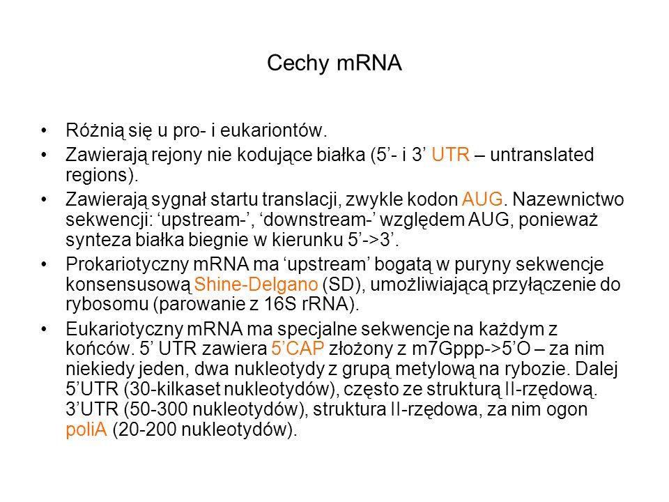 Cechy mRNA Różnią się u pro- i eukariontów.