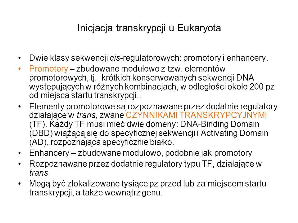 Inicjacja transkrypcji u Eukaryota