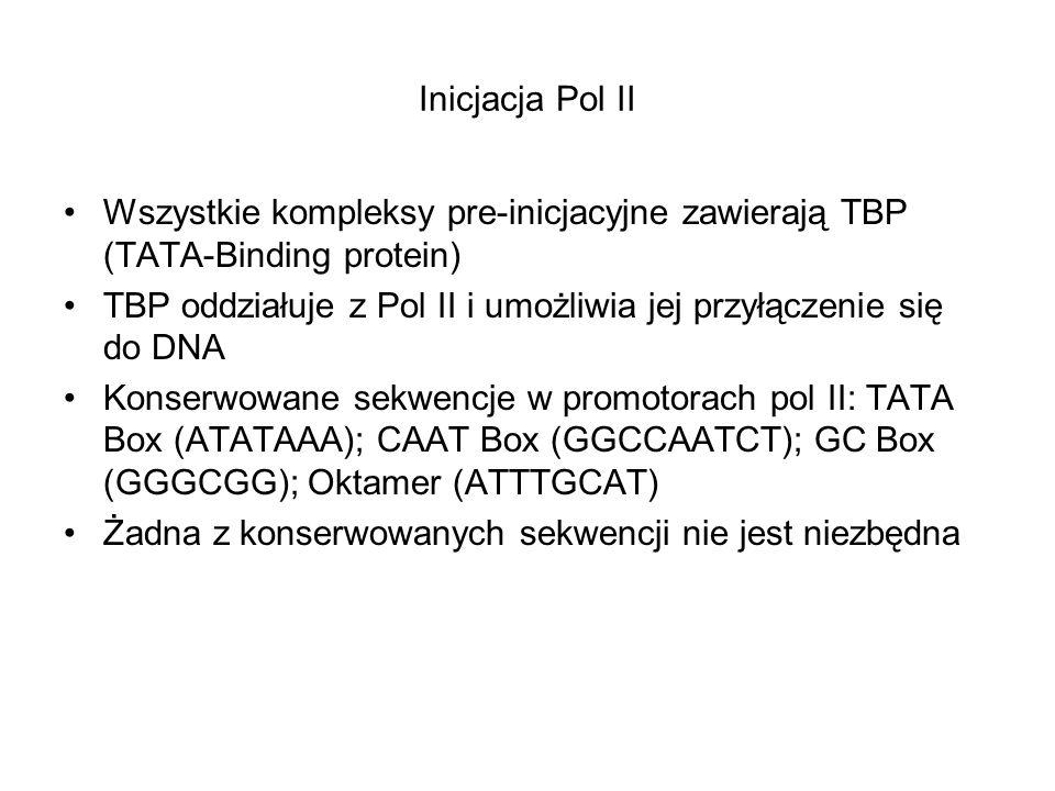 Inicjacja Pol II Wszystkie kompleksy pre-inicjacyjne zawierają TBP (TATA-Binding protein)