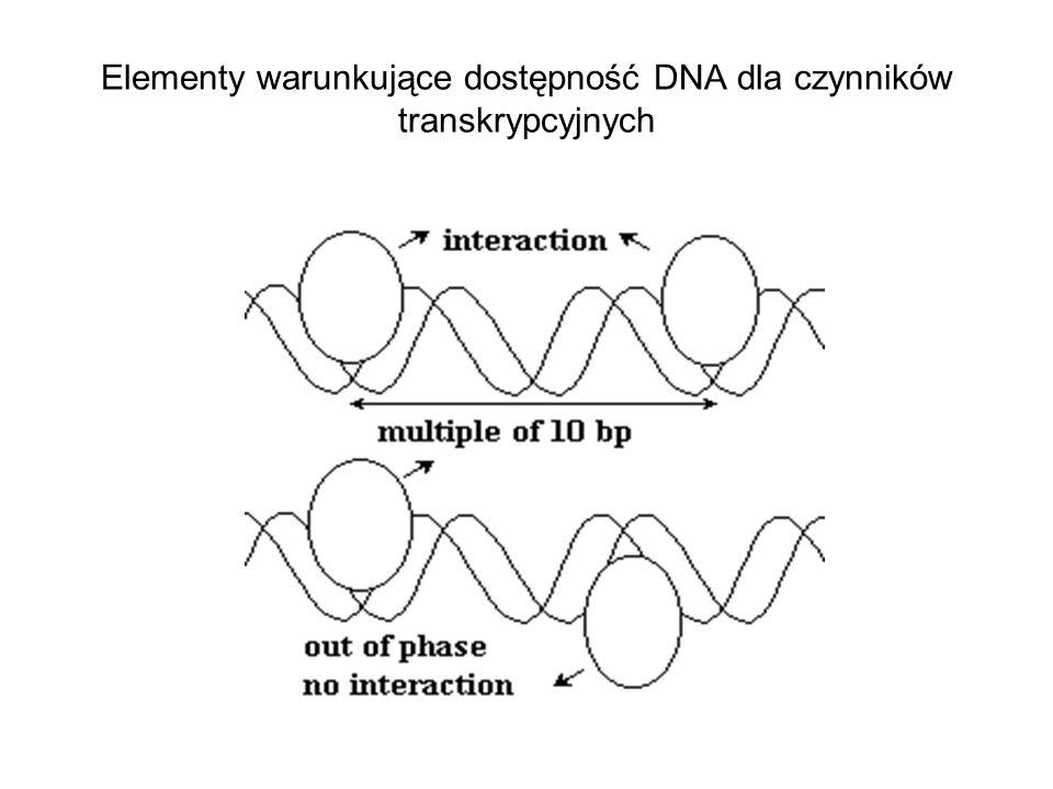 Elementy warunkujące dostępność DNA dla czynników transkrypcyjnych