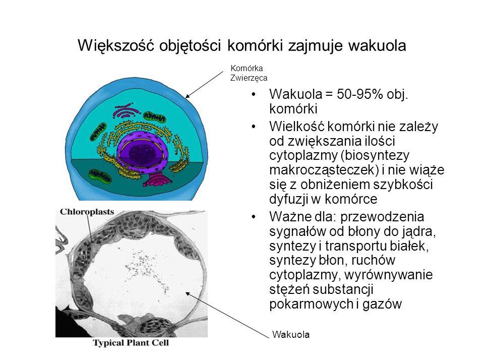 Większość objętości komórki zajmuje wakuola