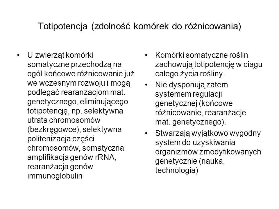 Totipotencja (zdolność komórek do różnicowania)