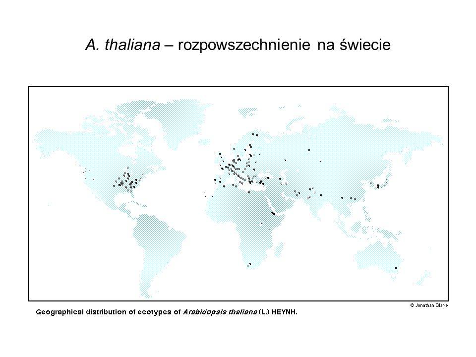 A. thaliana – rozpowszechnienie na świecie