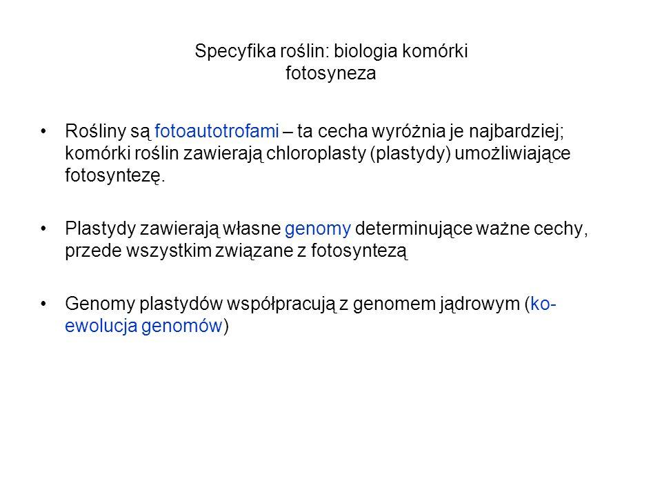 Specyfika roślin: biologia komórki fotosyneza