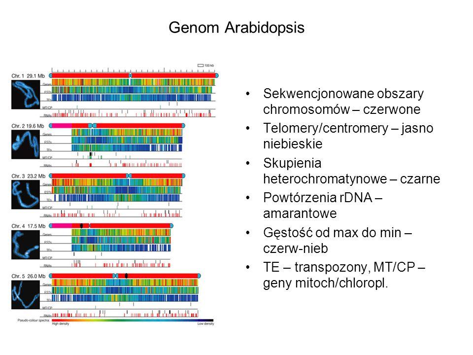Genom Arabidopsis Sekwencjonowane obszary chromosomów – czerwone