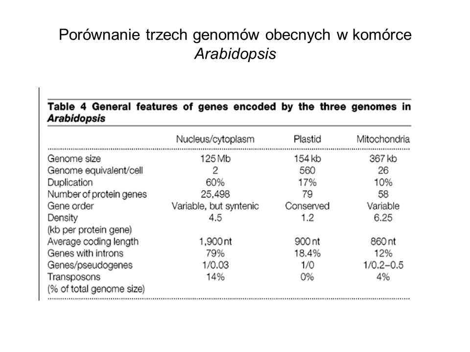 Porównanie trzech genomów obecnych w komórce Arabidopsis