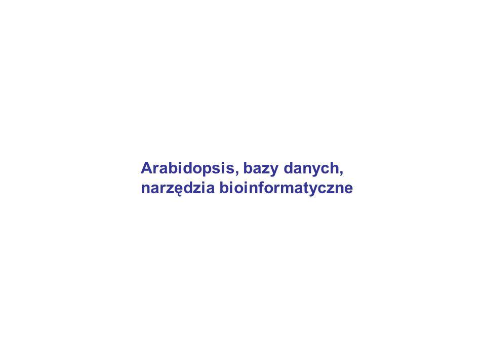 Arabidopsis, bazy danych,