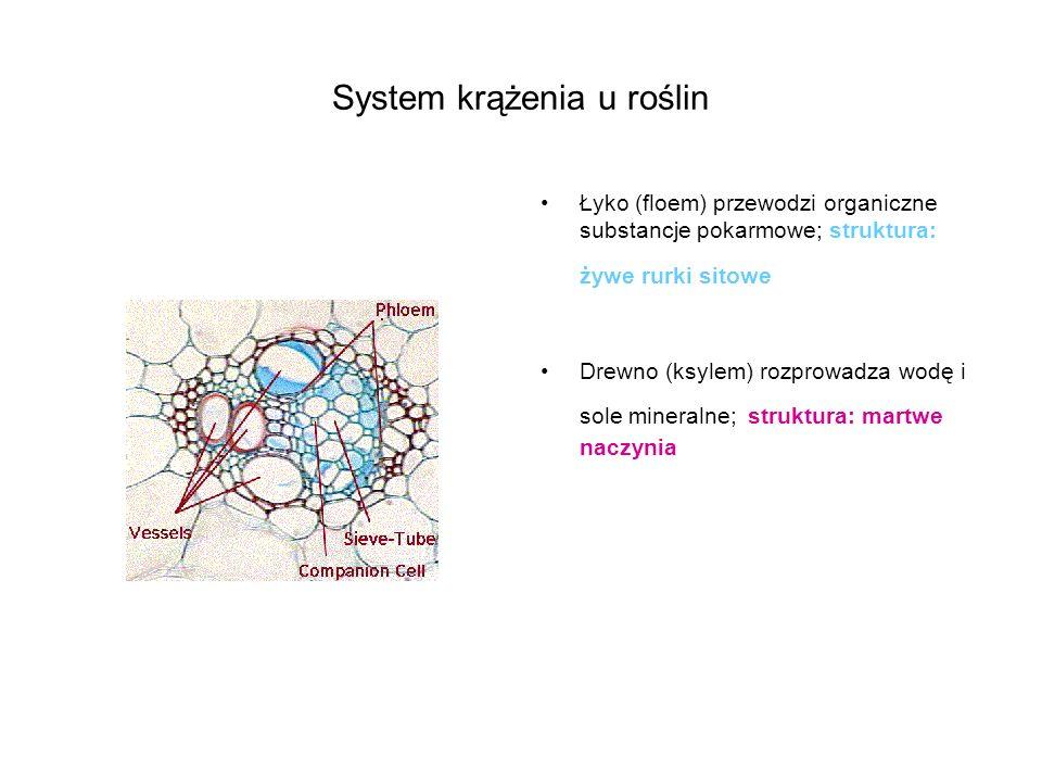System krążenia u roślin