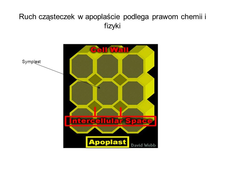 Ruch cząsteczek w apoplaście podlega prawom chemii i fizyki